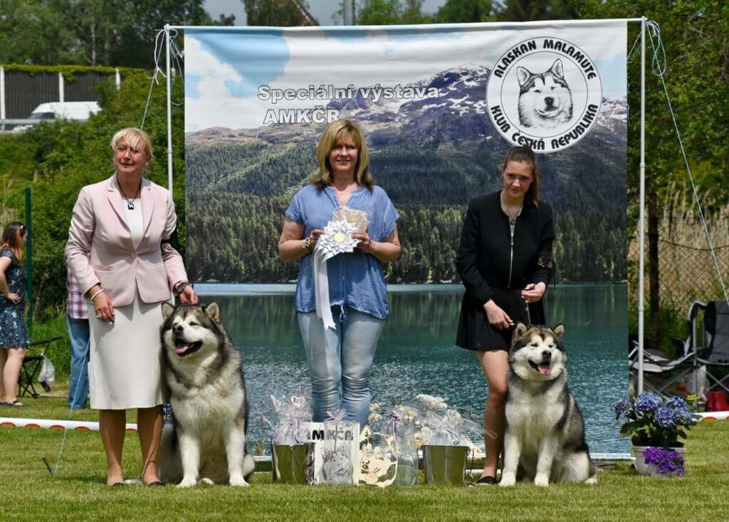 BOB a BOS Speciální výstavy aljašských malamutů AMKČR květen 2019